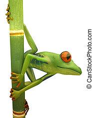 treefrog, rouges, isolé, bambou, observé