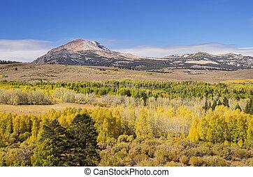 tremble, jaune, arbres, automne