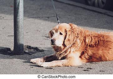 triste, attaché, chien, poteau, attente, laisse, store., propriétaire