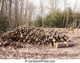 troncs, souche, bois, pays boisé, arbre, bas, coupure, tas bois, forêt, royaume-uni, branches, bois construction
