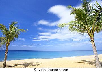 tropique, scène