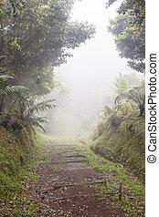 tropiques, brouillard, dense, par, piste