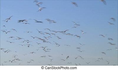 troupeau, 2, oiseaux