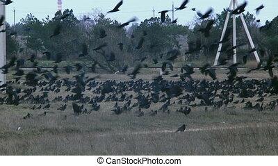 troupeau, oiseaux
