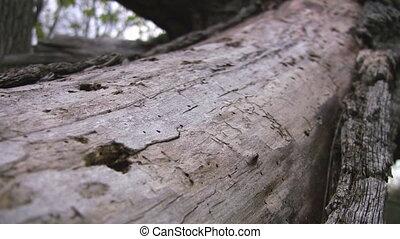 trous, long, arbre, termite, mort