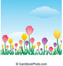 tulipe, modèle