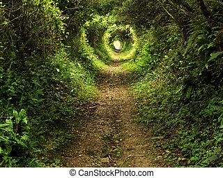 tunnel, enchanté, sentier forêt