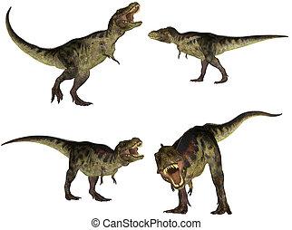 tyrannosaurus, meute