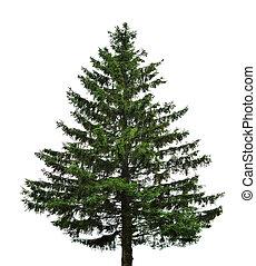 unique, arbre sapin