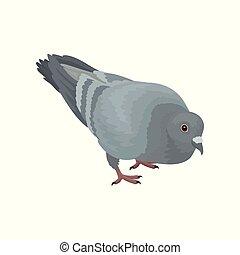 urbain, pigeon, gris, vecteur, fond, illustrations, oiseau blanc