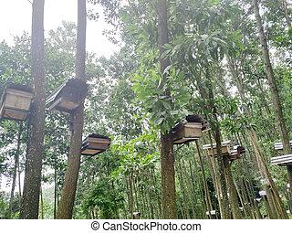 urticaire, forest., abeille