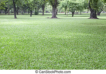 usage, naturel, parc, arrière-plan vert, herbe, public