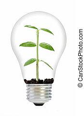 usine ampoule