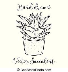 usine succulente, illustration., flowerpot., main, décoration, vecteur, dessiné
