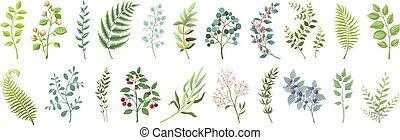 usines, botanique, verdure, elements., branches, bouquet, collection., feuilles, sauvage, vecteur, vert, vendange, floral, fleurs, branché