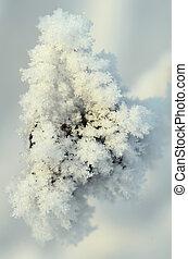 usines, branches, hiver, surgelé, résumé, arbre, neige