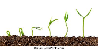 usines, croissant, soil-plant, isolé, progrès