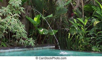 usines, extérieur, statue, ensoleillé, exotique, fontaine, fond, piscine, natation
