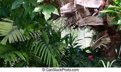 usines, garden., botanique, 4k., arbres, exotique, greenhouse.
