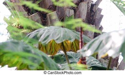 usines, garden., glasshouse., botanique, 4k., arbre, exotique, arrière-plan., intérieur, greenhouse.