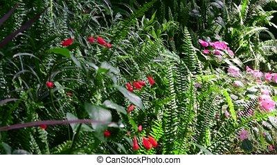 usines, garden., glasshouse., botanique, 4k., arbres, exotique, greenhouse., intérieur