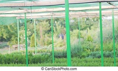 usines, irrigation, oxygène, ferme, système, production, croissant, environment., améliorer