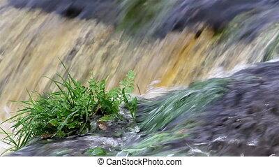 usines, marais, milieu, eau, petit, croissant, dépêcher, marais