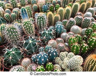 usines, plante, cactus, magasin, miniature, beaucoup, /, cactus