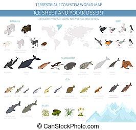 usines, polaire, isométrique, biome., désert, écosystème, fish, map., oiseaux, glace, animaux, infographic, conception, terrestre, feuille, mondiale, style., arctique, 3d