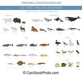 usines, polaire, oiseaux, biome., écosystème, arctique, map., animaux, glace, désert, infographic, conception, feuille, mondiale, terrestre, fish