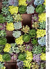 usines, succulent, miniature