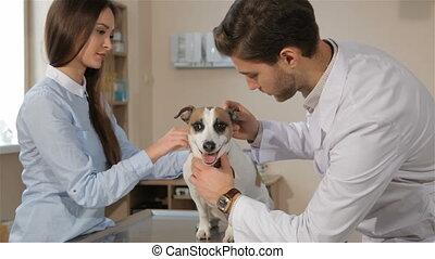 vétérinaire, chien, haut, clinique, vétérinaire, mâle, chèques