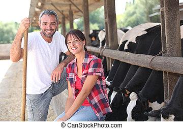 vache, agriculteurs