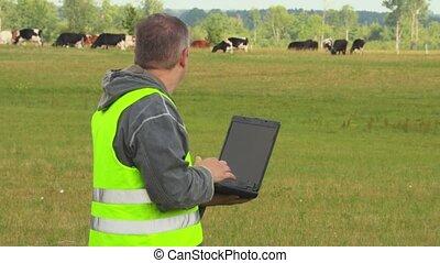 vaches, ordinateur portable, pré, paysan