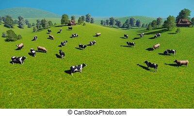 vaches, pâturage, vue, aérien, troupeau