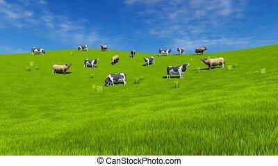 vaches, paître, vert, 4k, prairie, lait