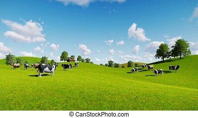 vaches, vert, prés, troupeau