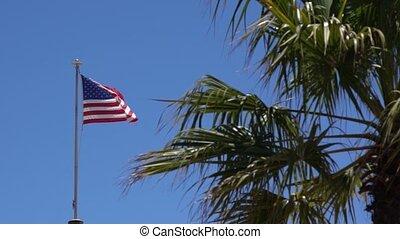 vagues, arbre, derrière, américain, brise, paume, lambeaux, drapeau