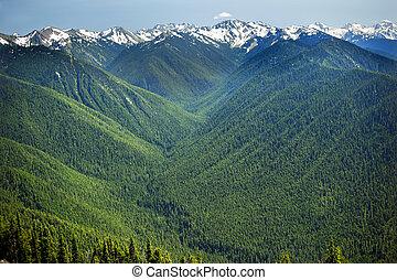 vallées, ligne, nord-ouest, washington, montagnes, pacifique, neige, olympique, hurricaine, arête, état vert, national, plantes à feuilles persistantes, parc