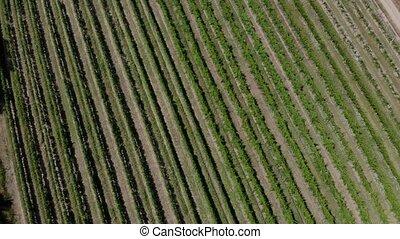 valley., vue aérienne, vignoble
