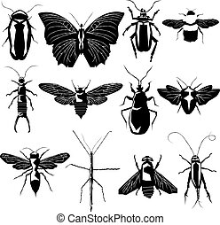 variété, vecteur, silhouette, insecte