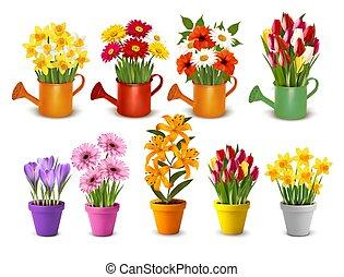 vecteur, arrosage, printemps, pots, mega, été, fleurs, collection, coloré, cans.