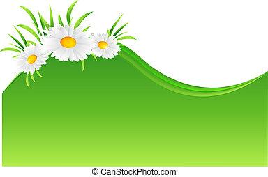 vecteur, camomille, fleur, illustration