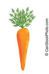 vecteur, carotte