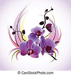 vecteur, carte voeux, orchidées