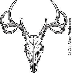vecteur, cerf, crâne
