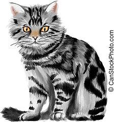 vecteur, chaton, tabby, illustration, séance