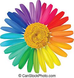 vecteur, coloré, daisy.