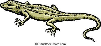 vecteur, dessin, lizard.