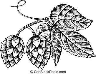 vecteur, feuilles, vendange, icône, (hand, dessiné, houblon, gravé, style), illustration